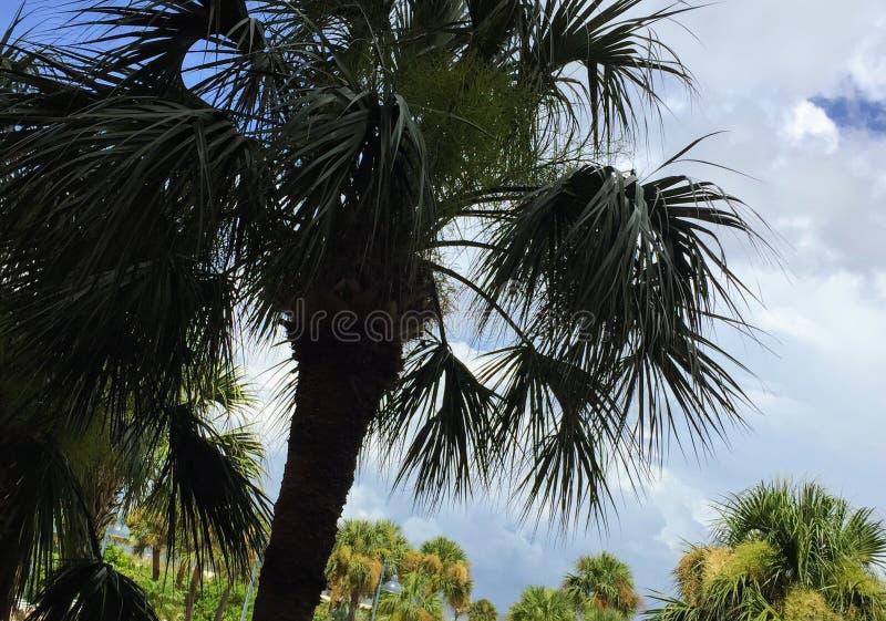 Vind me onder de palmen stock foto's