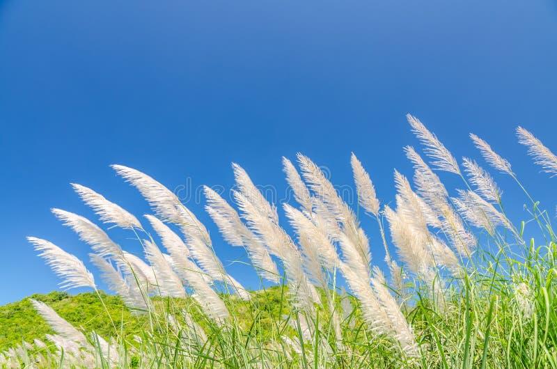 Vind som blåser till och med blommagräs royaltyfria foton