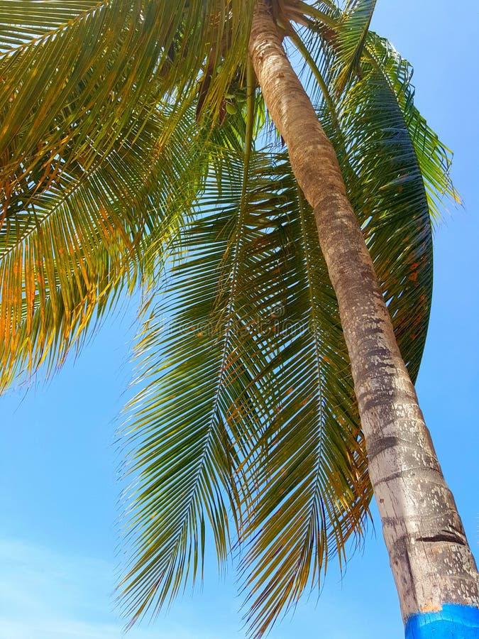 Vind som spelar på Palm Beach arkivfoto