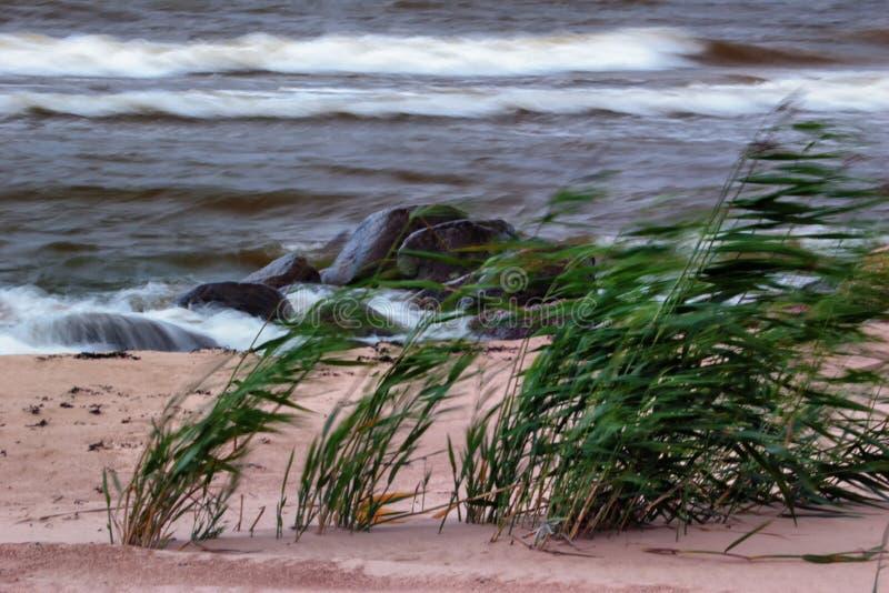Vinden på stranden royaltyfri bild