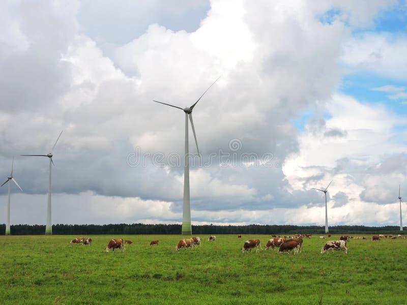 Vindkraftturbiner och koflock arkivbild
