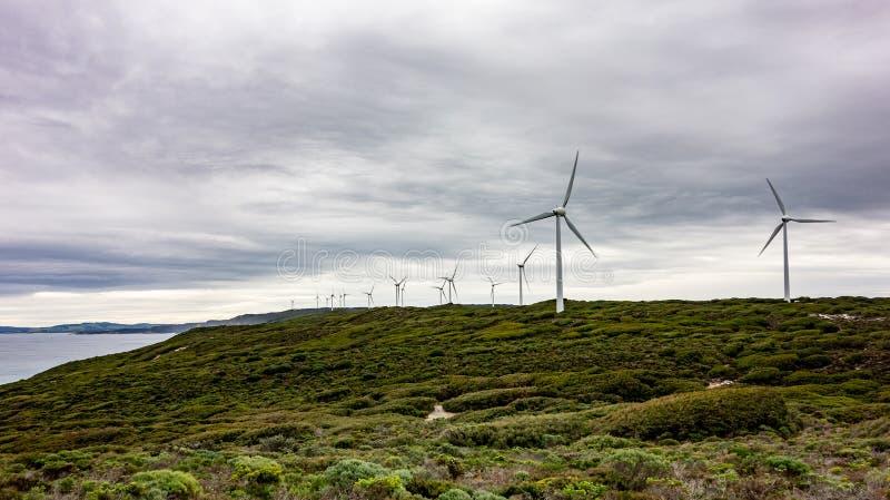 Vindlantgård med många turbiner i den Albany vindlantgården arkivfoton