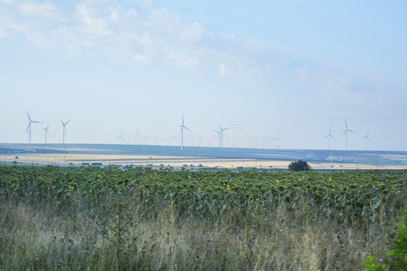 Vindturbiner och ett fält med solrosen arkivbild