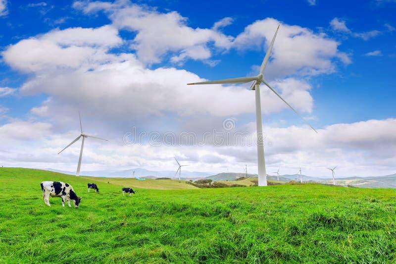 Vindturbiner och ko på grön äng fotografering för bildbyråer