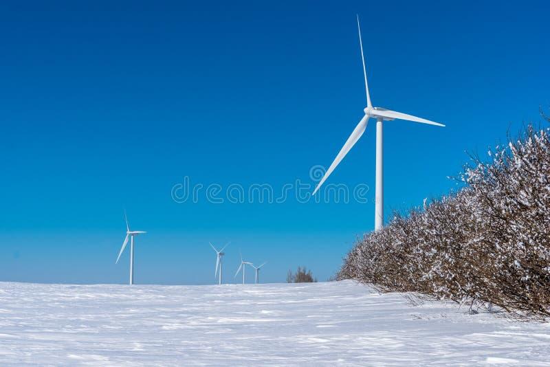Vindturbiner står högt ovanför en rad av träd som täckas i fasafrost i Saskatchewan arkivfoton