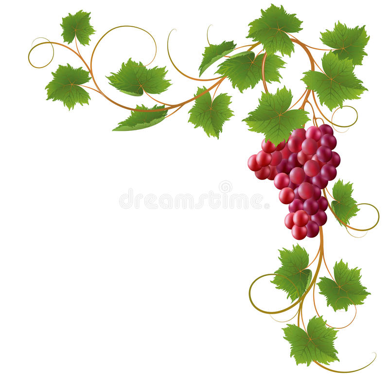 vine vektor illustrationer