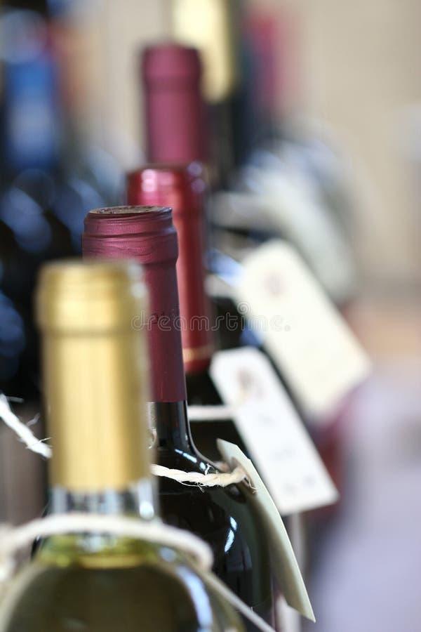 Free Vine Stock Photo - 1053470