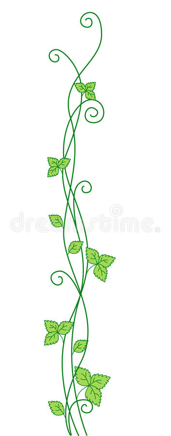 Vine. Green growing vine isolated on white background stock illustration