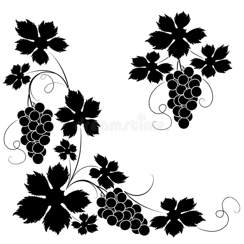 Vine. Decorative elements from the vine on a white background stock illustration