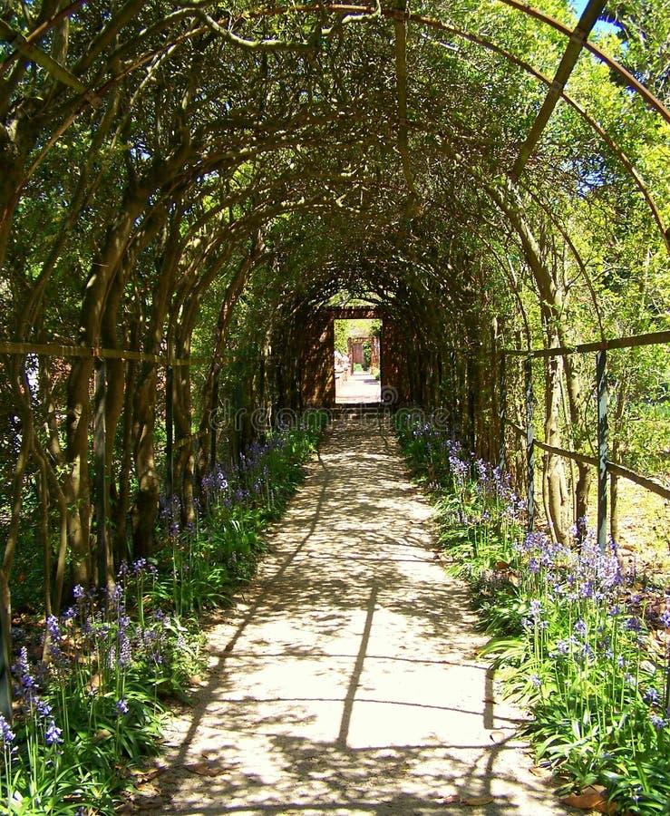 Download Vine arbor tunnel stock image. Image of path, historic - 2729007