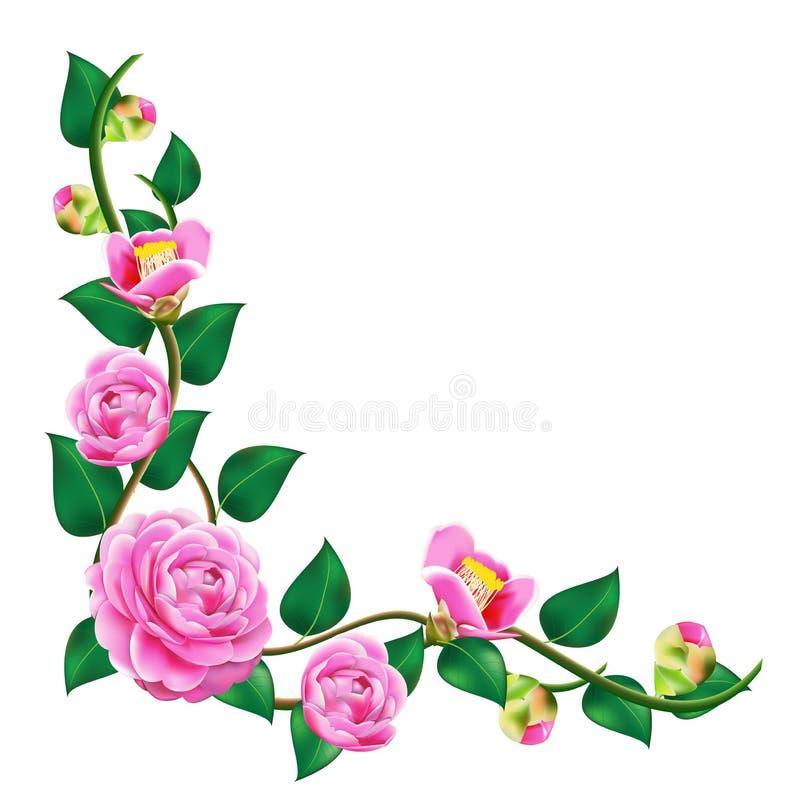 Vine beautiful camellia stock vector. Illustration of ...  Vine beautiful ...