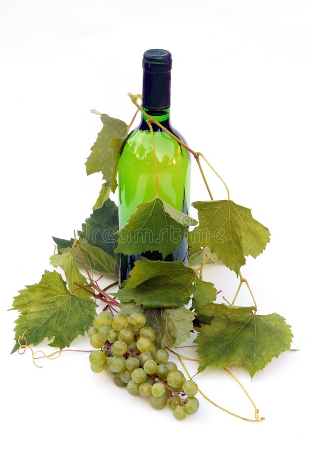 Vine bottle and young grape vi stock image