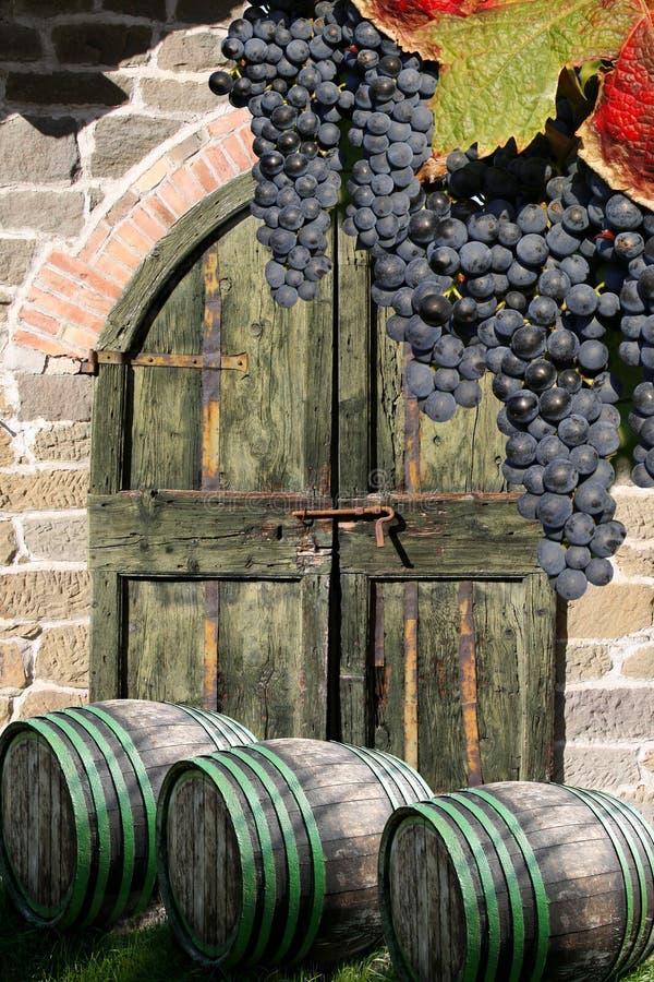Vine cellar with vine barrels stock image