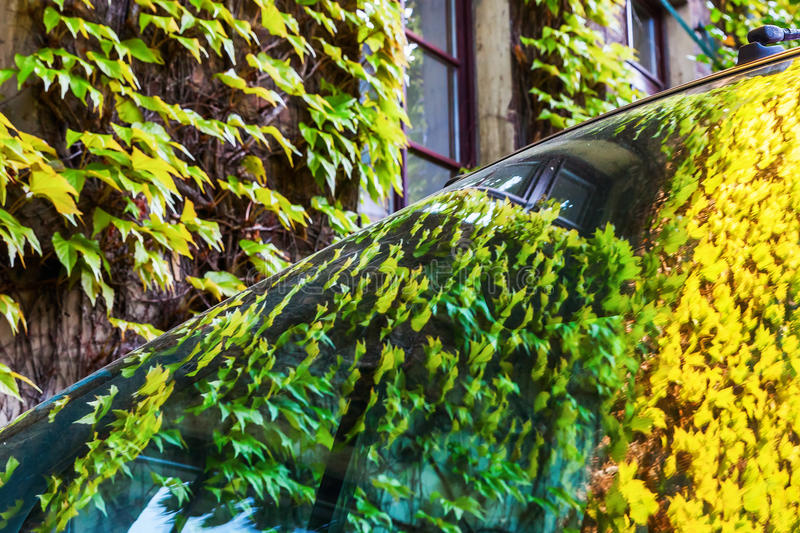 Vine-clad house wall reflecting in a car royalty free stock photos