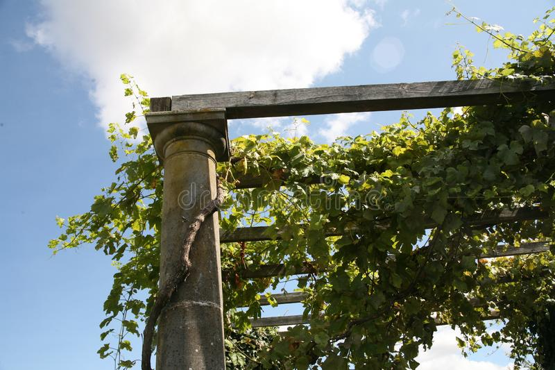 Vine column roman Greek Greek vineyard leaves grapes vines royalty free stock photography