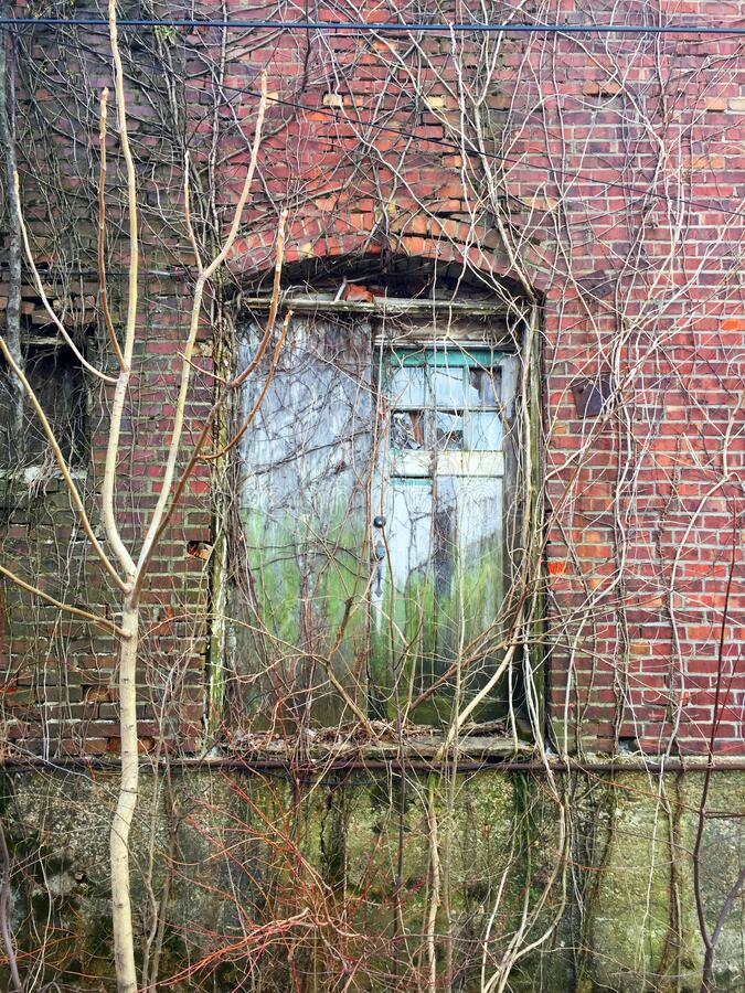Vine covered double doors in alley 02 royalty free stock photos
