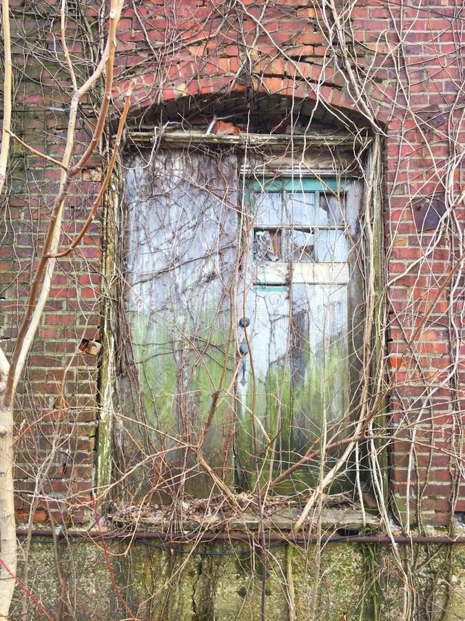 Vine covered double doors in alley 01 royalty free stock photos