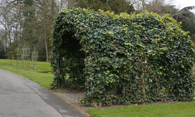 Download Vine Covered Garden Arch Stock Photo. Image Of Stadtpark   79165974