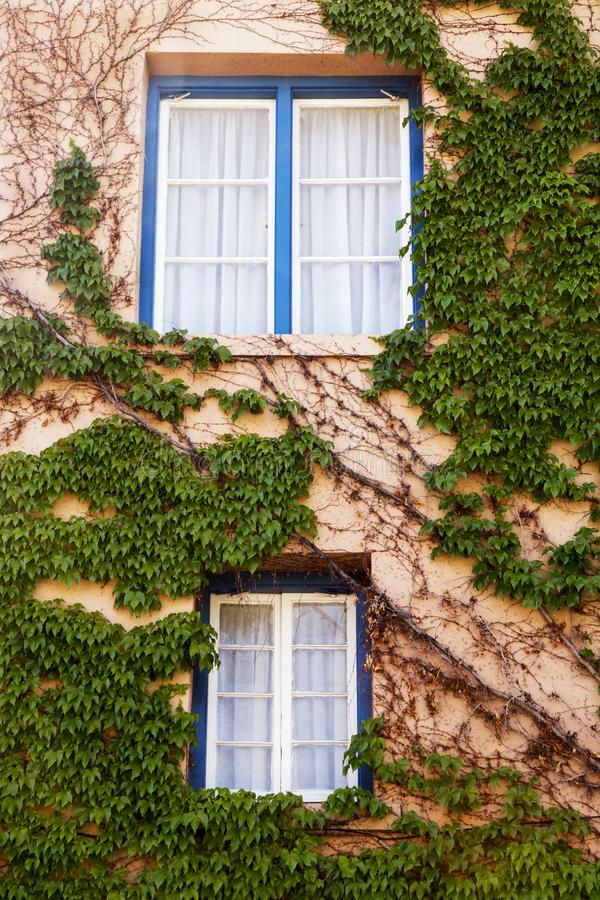 Vine Covered Walls and Blue Window Frames in Santa Fe, New Mexico stock photography