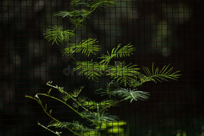 A vine on fence with dramatic light. A vine on fence with dramatic. Plant, botany, flower, light, growth, flora, bush stock photo