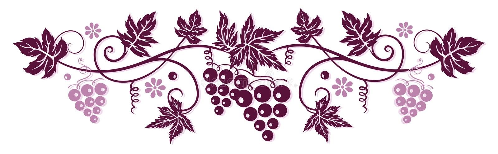 Vine with grapes. And vine leaves in bordeaux royalty free illustration