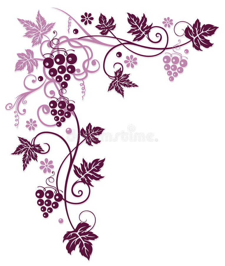 Vine with grapes. And vine leaves in bordeaux vector illustration