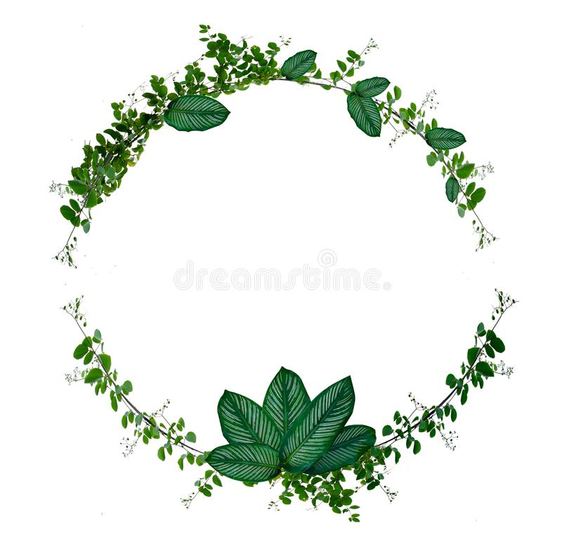 Vine and leaf monstera Circle of Isolates Used in design Border Frame made of Green climbing plant isolated on white background royalty free illustration