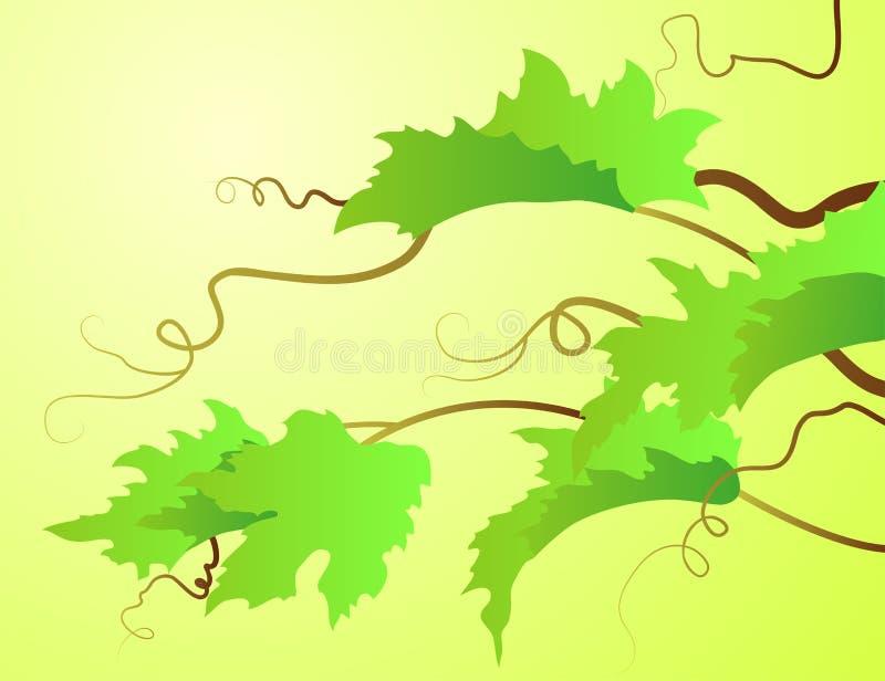 Download Vine lives stock photo. Image of leaf, green, brown, food - 35330722