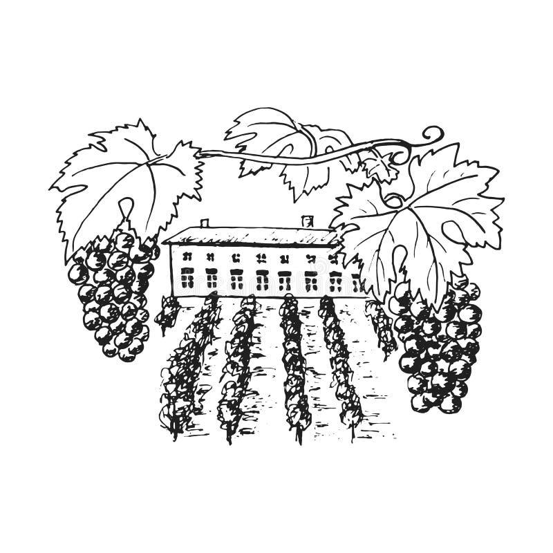 Vine plantation, grapes hills, trees, house, winery on the horizon vector illustration. Hand drawn stock illustration
