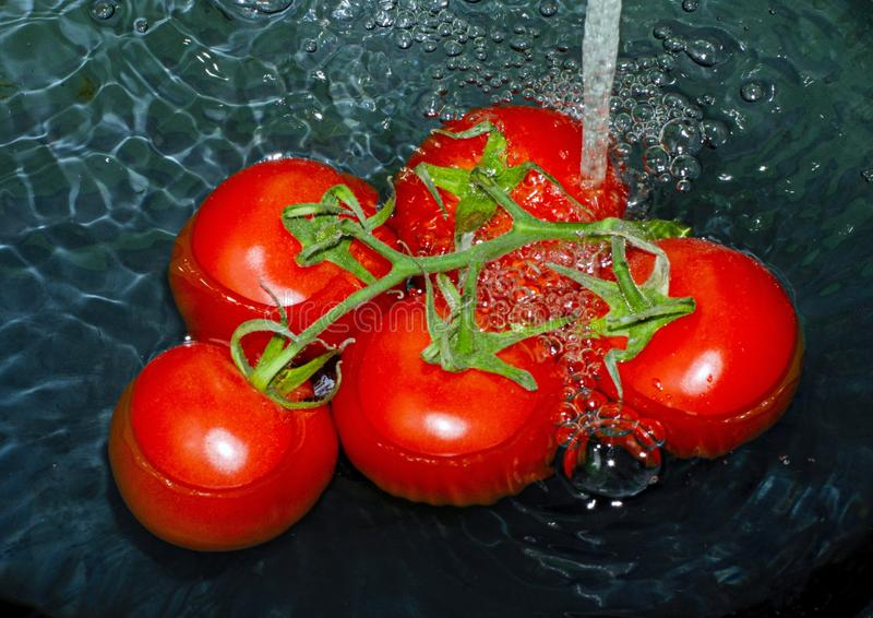 Vine of ripe tomato under a stream of water on a black background stock image