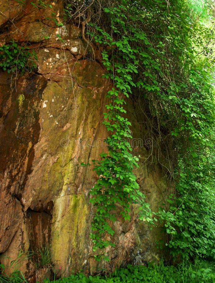 Vine on Rock Wall along Elkin & Alleghany Rail Trail stock images