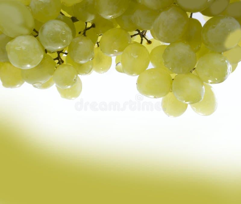 Vine royalty free stock photography