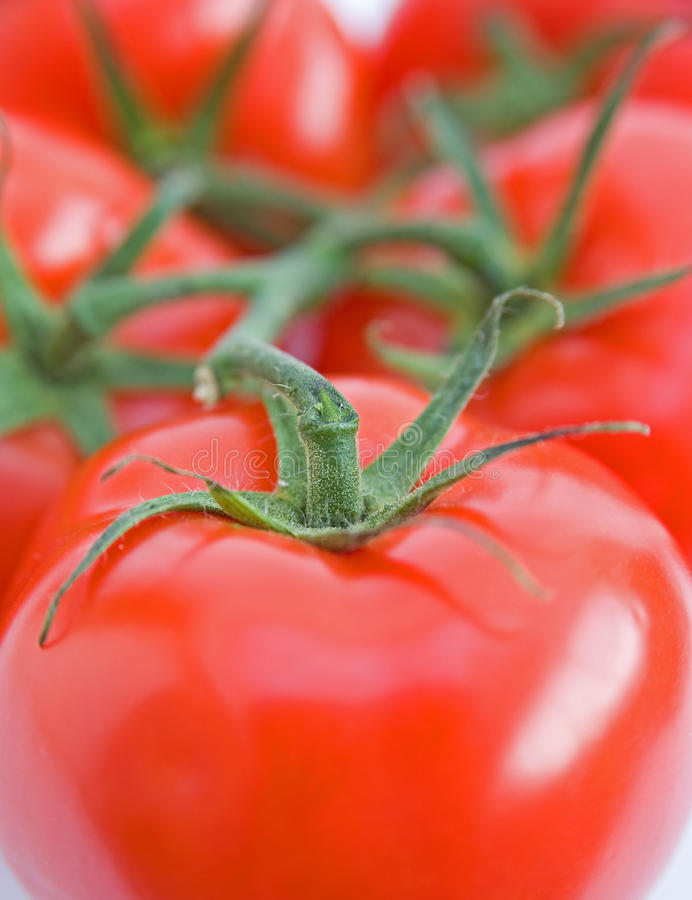 Vine tomatoes. Ripe tomatoes still on the vine are shown filling the frame of this image stock images