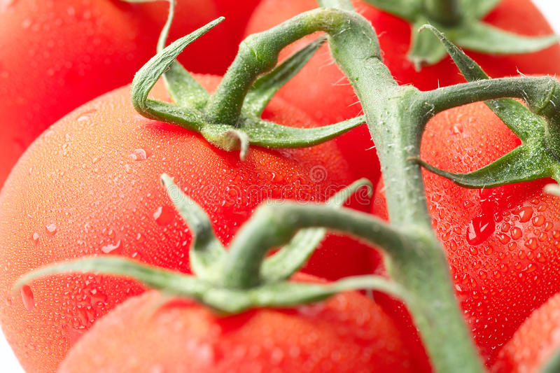Vine tomatoes closeup royalty free stock photography