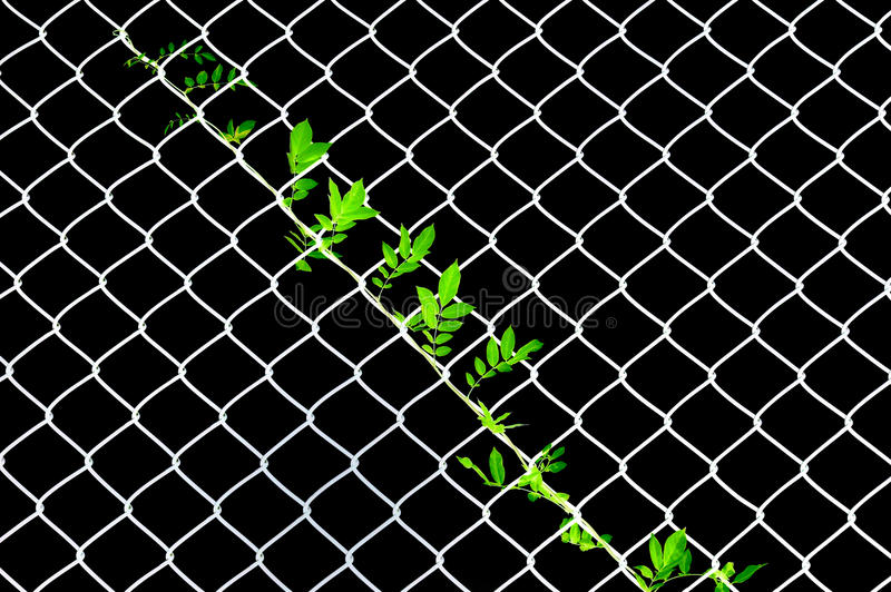 Download Vine on wire netting stock photo. Image of color, industry - 10693832