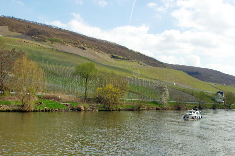Vine yards of Bernkastel-Kues on the river Mosel in Germany. View of Bernkastel-Kues on Mosel river, Germany on a sunny day royalty free stock photo