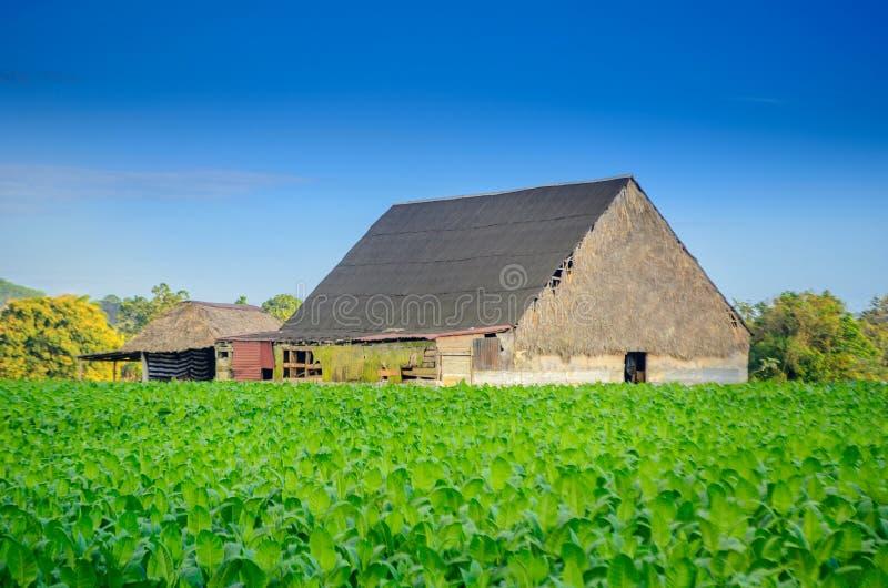 Vineales, exploração agrícola cubana rural do cigarro, casa do plantador foto de stock
