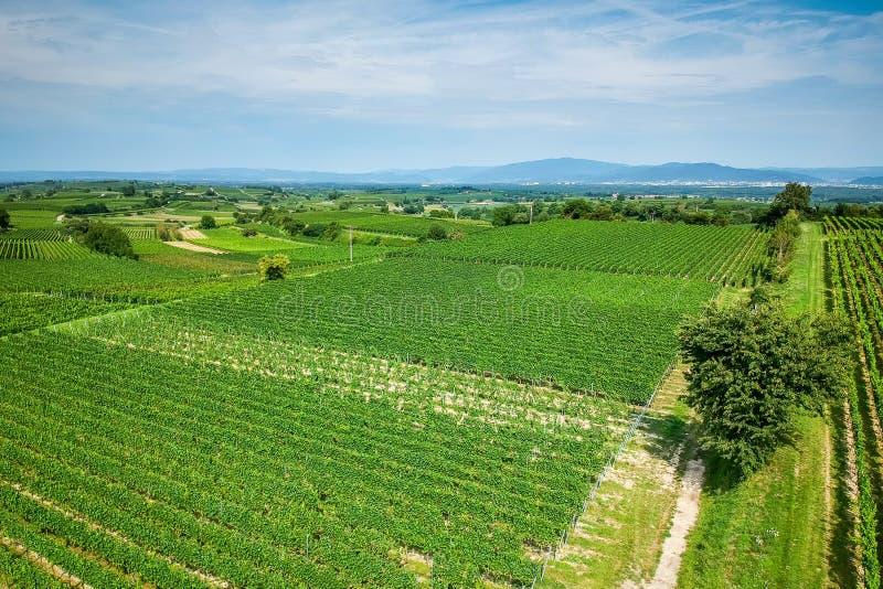 vineculture在弗莱堡德国 库存图片