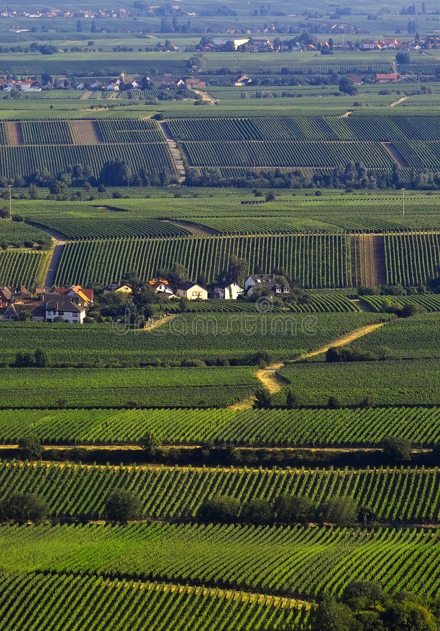 vinefields arkivfoto