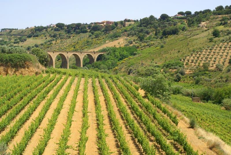 vinery взгляда стоковые фото