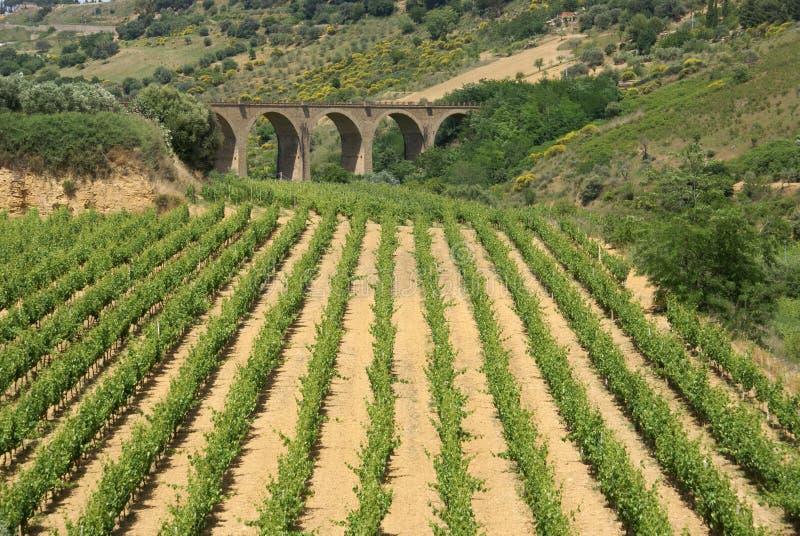 vinery моста стоковые фото