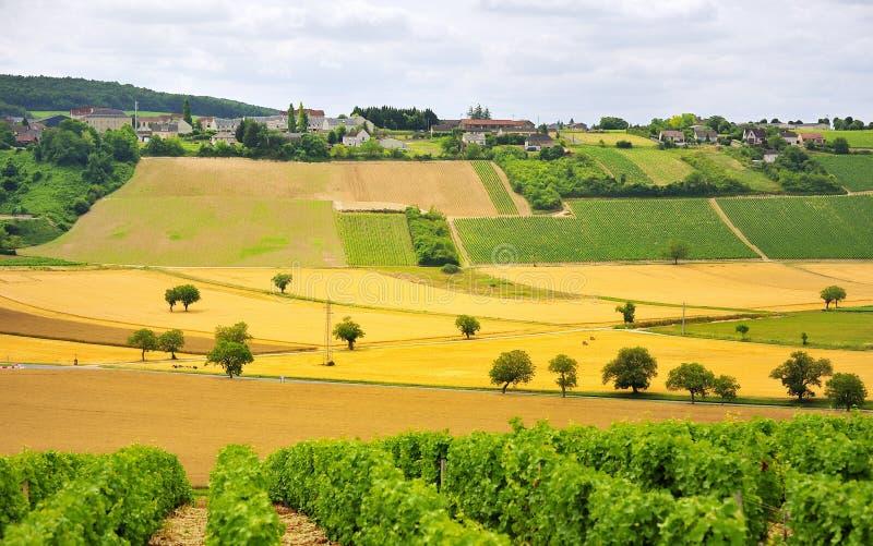 Download Vines And Agriculture, Sancerre, France Stock Image - Image of orleans, cereals: 23875439