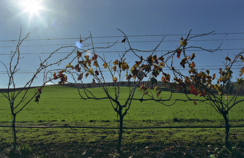 Vines on green