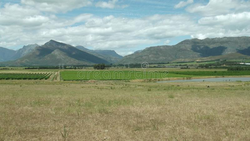 Vines in the open. Vineyards across an open field at Romans River near Wolseley in rural Western Cape SA stock image