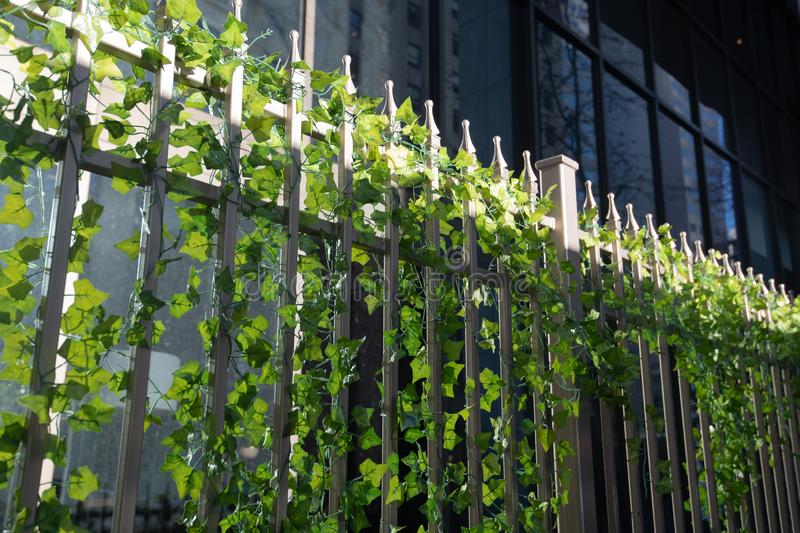 Vines on an urban fence stock images