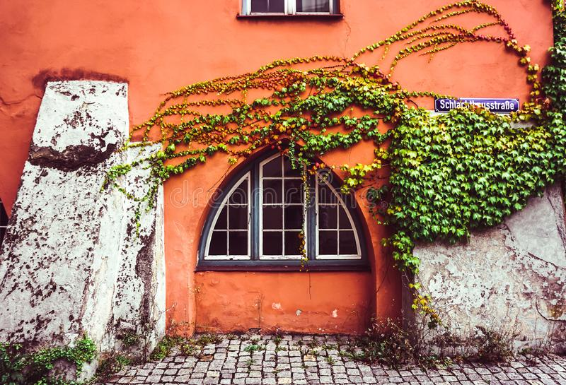 Vines on a Wall royalty free stock photography
