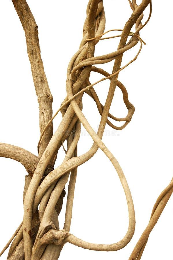 vinetråd royaltyfri bild