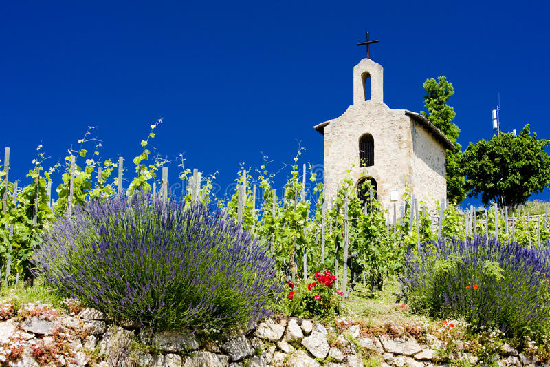 Download Vineyard stock image. Image of alpes, churches, exteriors - 14858165
