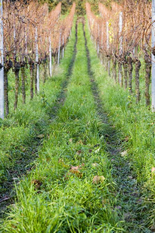 Vineyard. Colourful vineyards in autumn at the Pfalz in Germany royalty free stock photo