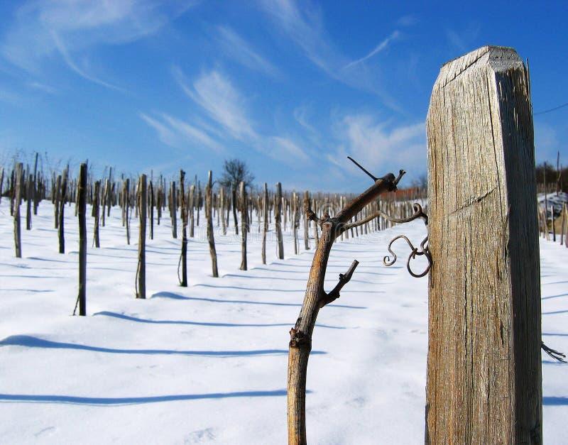 Download Vineyard stock photo. Image of shadows, vineyard, sunny - 163974